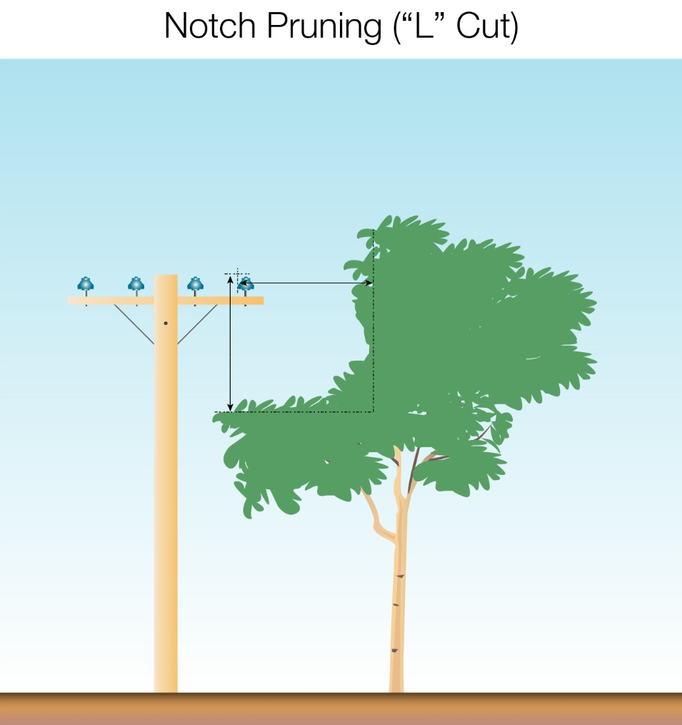 notch pruning l cut
