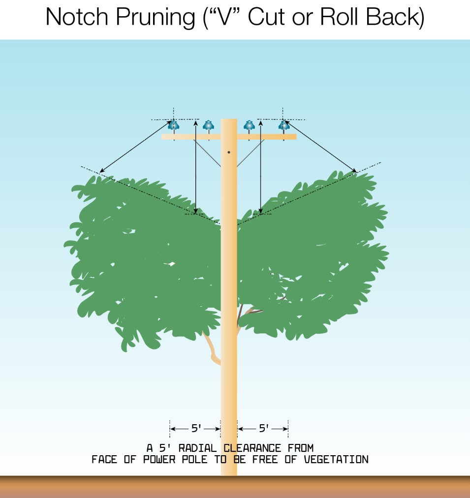 notch pruning v cut